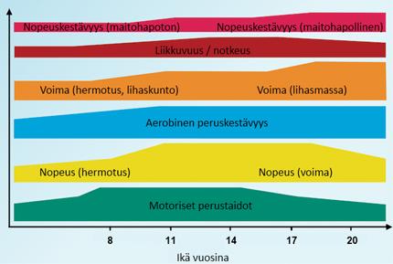 Fyysisten ominaisuuksien painopistealueet eri ikävaiheissa